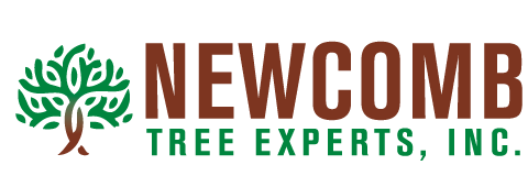 Newcomb Tree Experts